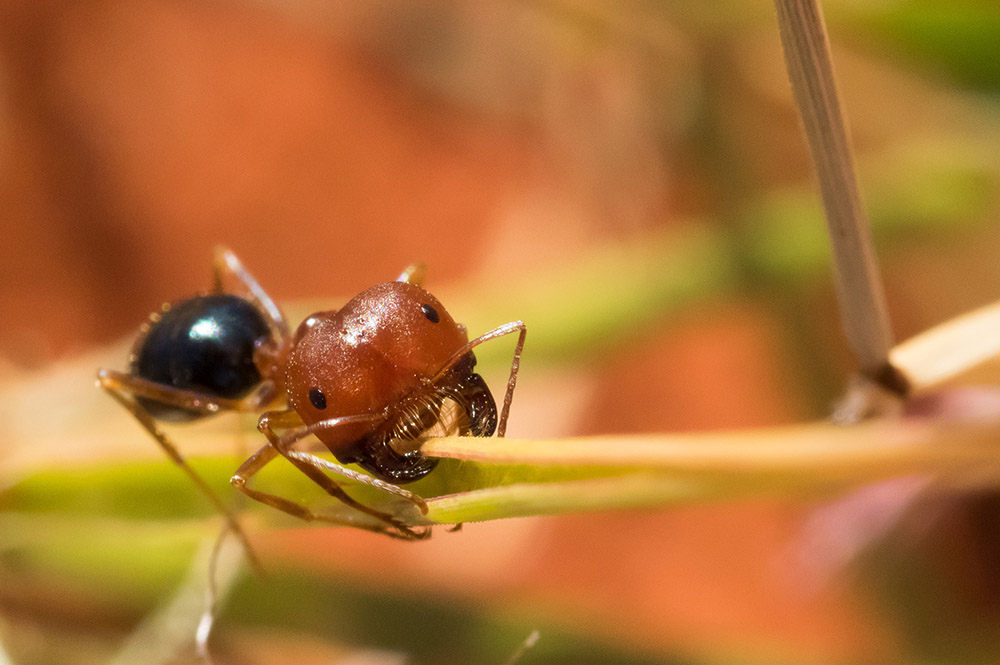 Ant. Photo: David Nelson