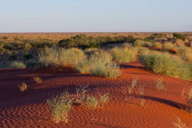 Dune. Photo: David Nelson
