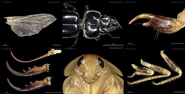 Bugs 4 Beasts Image2