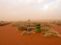 Sandstorm, Main Camp. Photo: David Nelson