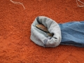 <I>Varanus gouldii</I>, Sand Goanna. Photo: Jess Lawton