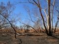 Burnt Field River Channel. Photo: Glenda Wardle