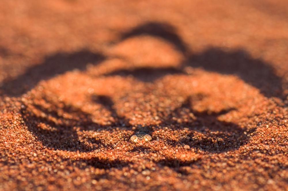 Sand angel grasshopper. Photo: David Nelson